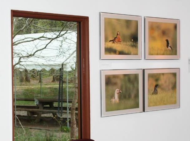 Exposition photo animalière Espace Rambouillet 2016