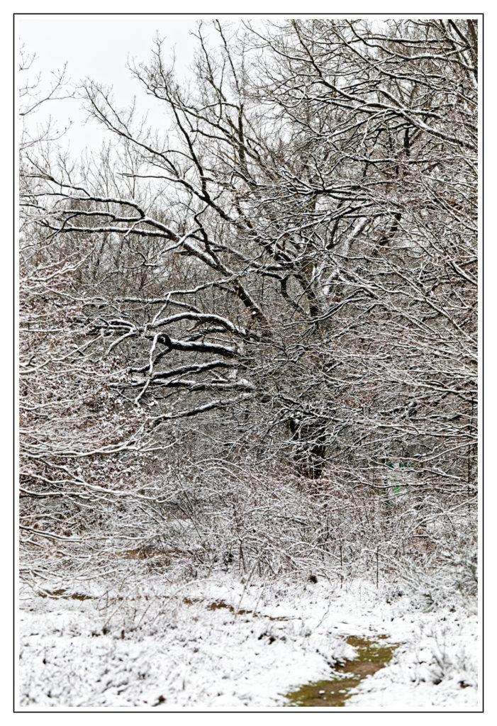 la neige à saupoudré le décors