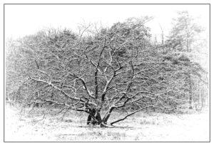 la neige sur un arbre
