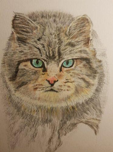 Portrait d'un Chat Forestier -2 Karin Caporal.