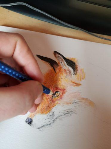 Portrait d'un renard roux