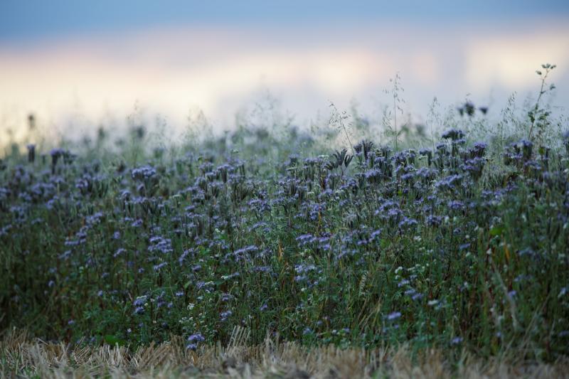 Partie plantée en bordure du champ