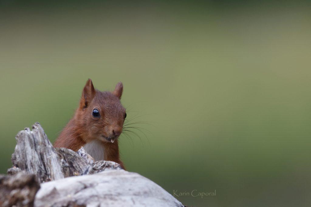 l'écureuil mange des graines