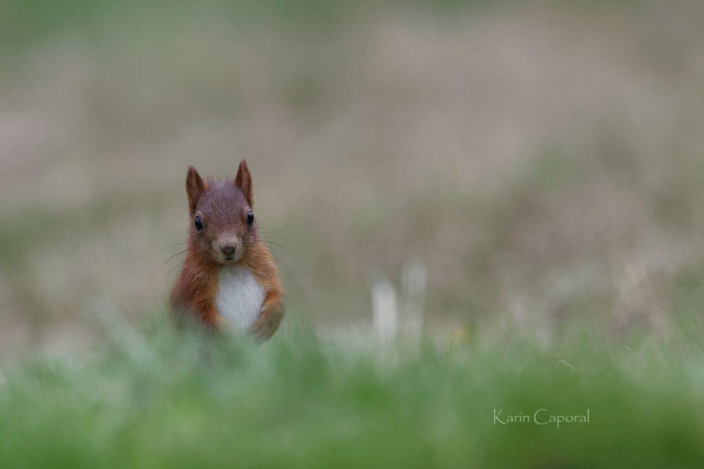 L'écureuil est drôle et facétieux 2
