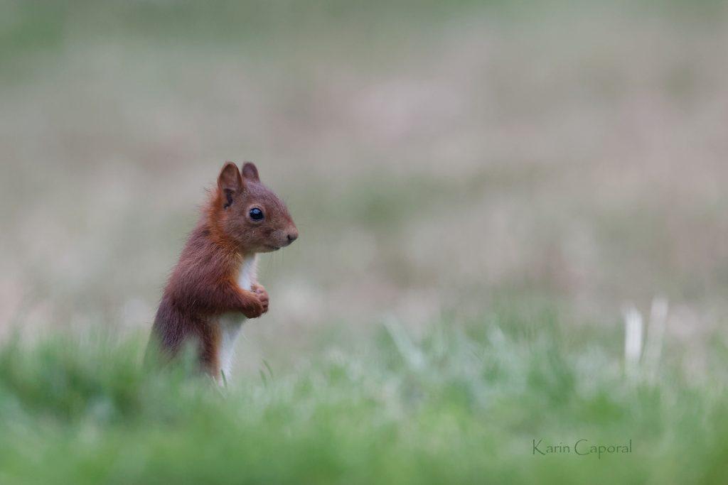 L'écureuil est drôle et facétieux 3