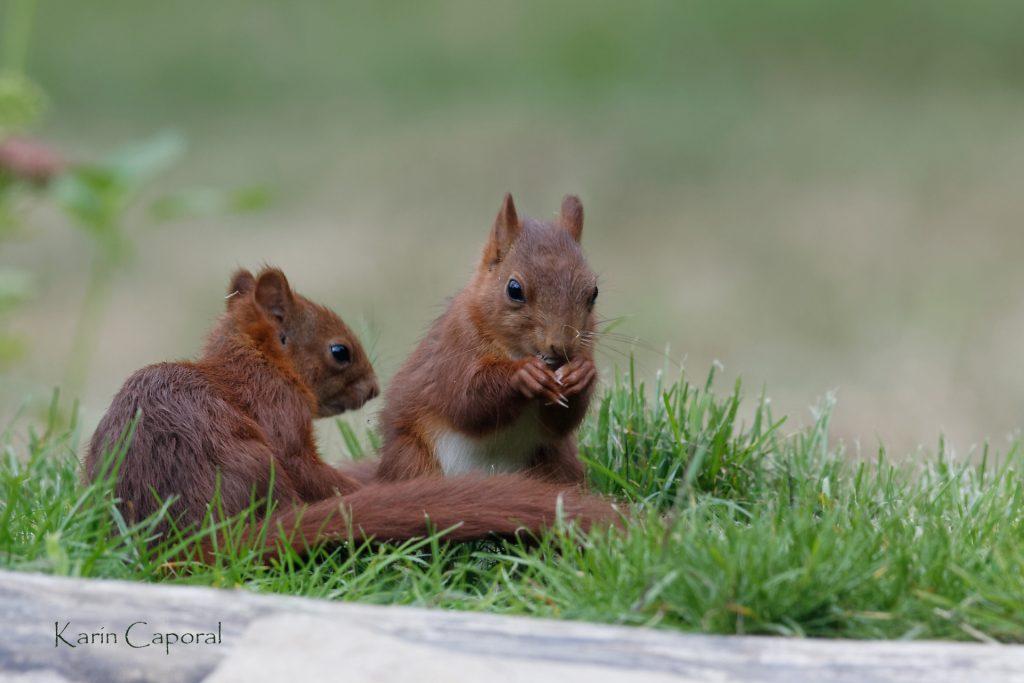 2 écureuils