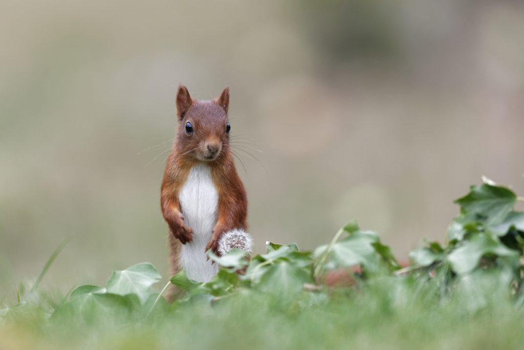 l'écureuil est amusant à regarder