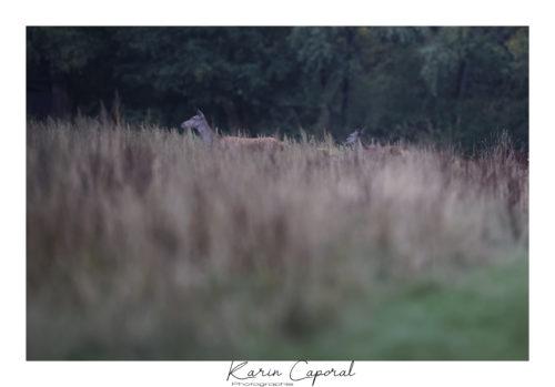 Le maitre dans les herbes