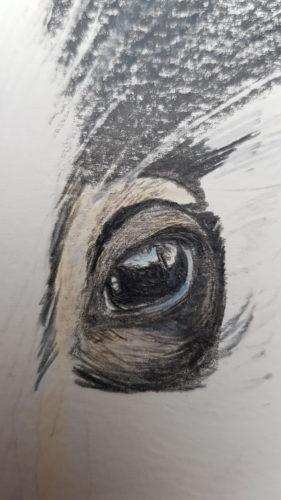 03- Dessin du Blaireau